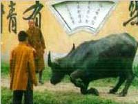 真实灵异事件:福建老牛被杀前跪地乞命(图)