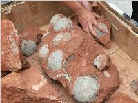 广东恐龙蛋化石再获43枚(图)