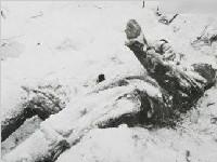 组图:残酷的战争让苏军冻成冰人