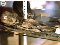 罗斯维尔UFO事件:发现外星人完整尸体(图)