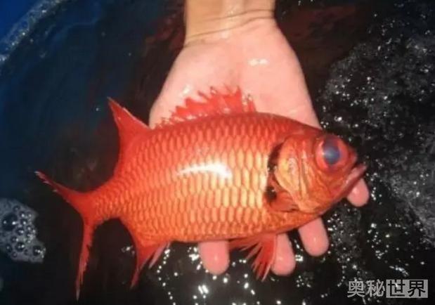 世界上最可爱的鱼