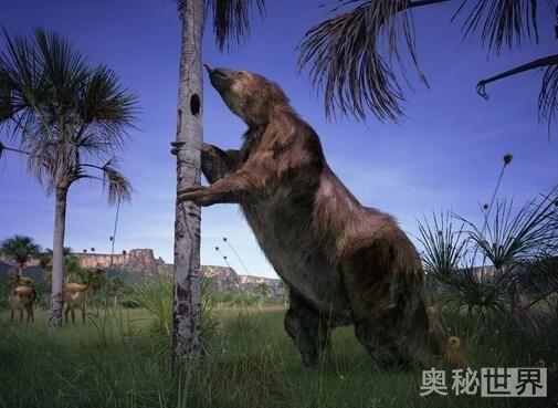已灭绝的动物,盘点那些珍稀动物