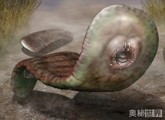 鼻行动物,这种动物居然用鼻子行走图片