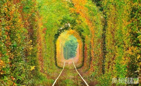 乌克兰爱的隧道,最别致的风景线